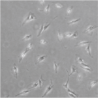 Normal culture 1x104 cells seeded and incubated for 24 hrs. RepCell™ 6cm dish used